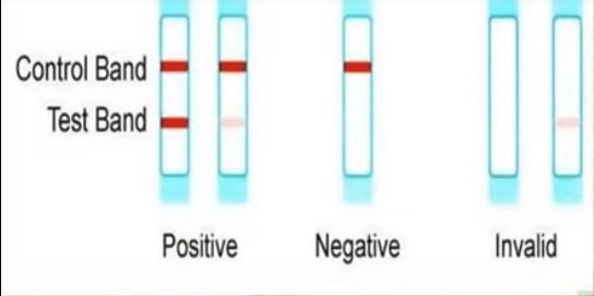 sign of Pregnancy Test Positive Image